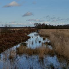 Photo of Whixall Moss NNR, Shropshire