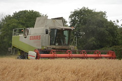 Claas Lexion 480 Combine Harvester cutting Spring Oats (2) (Shane Casey CK25) Tags: claas lexion 480 combine harvester cutting spring oats grain harvest grain2019 grain19 harvest2019 harvest19 corn2019 corn crop tillage crops cereal cereals golden straw dust chaff county cork ireland irish farm farmer farming agri agriculture contractor field ground soil earth work working horse power horsepower hp pull pulling cut knife blade blades machine machinery collect collecting mähdrescher cosechadora moissonneusebatteuse kombajny zbożowe kombajn maaidorser mietitrebbia nikon d7200