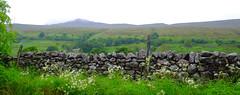 Yorkshire-Cumbria Border (Adam Swaine) Tags: cumbria thedales pennineway pennines nationalparks aonb england english englishlandscapes walls stonewall rural britain british uk ukcounties counties countryside county countrylanes hills walks adamswaine 2019 misty summer mist wet rain grass fuji northeast