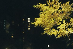 (lemonhats) Tags: canonetql17giii canon11740 fujicolorsuperiavenus800 classicrangefinder vintagecamera 40mm17 fixedlensrangefinder manualfocusfixedprimelens iso800 35mmcolorprintfilm traditionalphotography analoguephotography filmphotography filmisnotdead filmisalive shootfilm believeinfilm filmcommunity filmforever fpper walking nerimaku tokyoto hikarigaokapark nightexposure