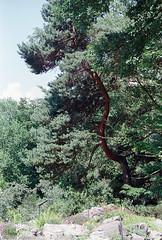 curved (McMac70) Tags: botanischergarten canont50 film frankfurtammain plustekopticfilm7400 rossmannhr200 silverfast880r11 hessen brd