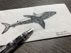 So much rain in Atlanta this month, guessing these guys are in the puddles! (schunky_monkey) Tags: bigfish fear water illustration art fountainpen penandink ink pen drawing draw sketching sketch napkinsketch napkin hunter beautiful ocean shark