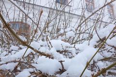 18. Photos taken by Andrey Andriyenko in January-February 2020