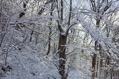 24. Photos taken by Andrey Andriyenko in January-February 2020