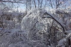 26. Photos taken by Andrey Andriyenko in January-February 2020