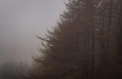 Photo of Autumn Fog