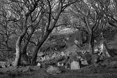 Photo of Beech/Rocks