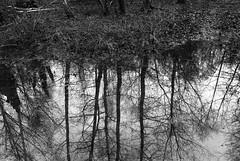Photo of Reflective puddle