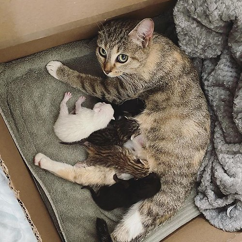 I got a call today about a mama cat who was brought into @mckameycenter with her litter of five kittens who are just a couple days old. They came in healthy, so the goal was to get them into a foster home ASAP and keep them that way. . It's been about a y