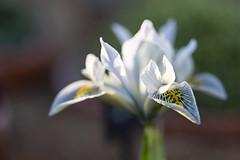 Photo of white alpine