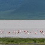 I fenicotteri rosa all'interno del cratere del Ngorongoro
