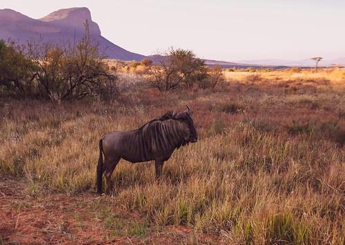 South Africa, Limpopo, Entabeni