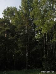 Лосячий острів, Московська область 53   InterNetri