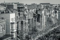 2020.02.22 DC People and Places, Washington, DC USA 053 49212