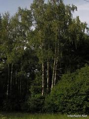 Лосячий острів, Московська область 54   InterNetri
