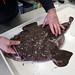 Monfish Prep