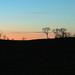 Twilight treeline silhouette