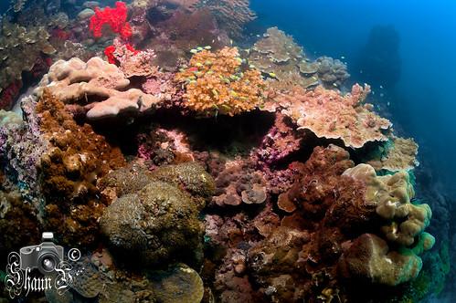Scuba Diving in The Gulf of Tadjoura