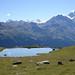 Val d'Anniviers vue sur le Bishorn et le Weisshorn