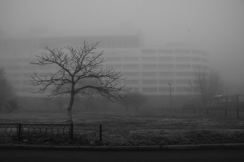 ae.vl.fog.2019 ©  arina.ertman