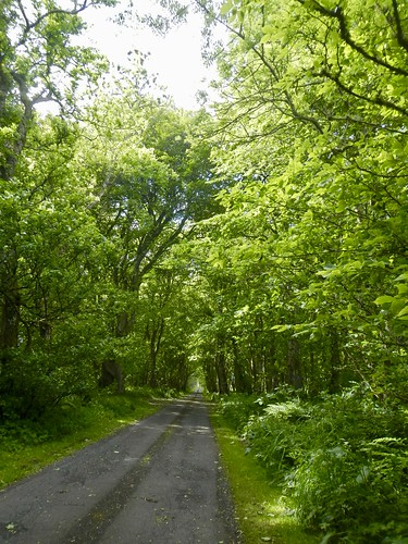 The Road From Forse of Nature