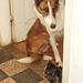 Dog and kitten conversation