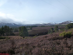 Photo of 5 South of Inverlaidnan Hill 070315
