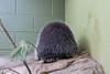 Porcufriend at EcoTarium