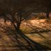 Frosty Sunrise at Redgate Park