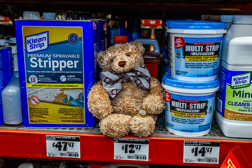 Little Texas Aggie Bear Loves the Strippers at Home Depot