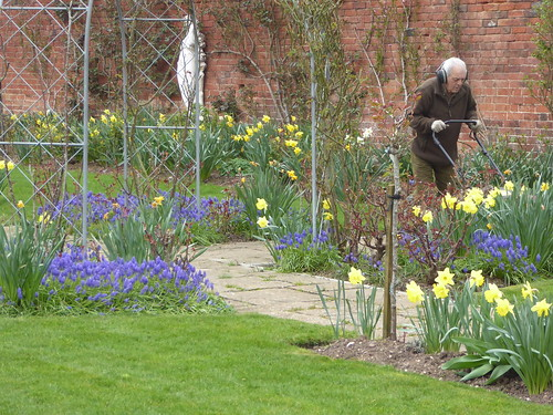 March - early mowing in the rose garden