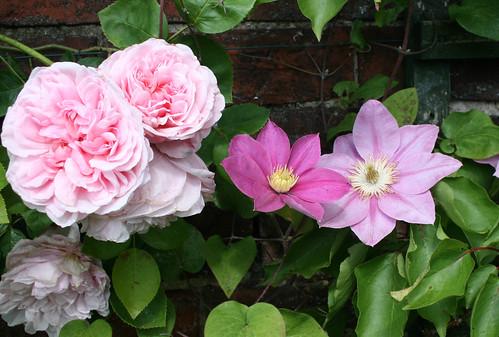 Flowers June19