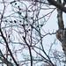Hidden woodpecker