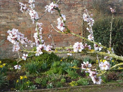 February  - Almond blossom