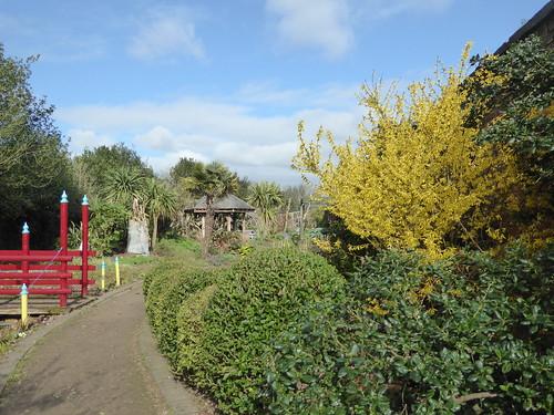 March - sensory garden forsythia