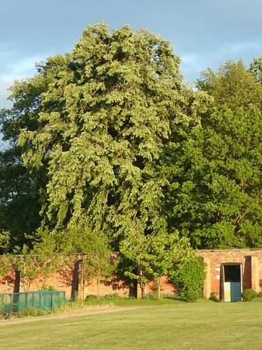 May - trees