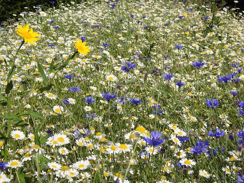 June - wildflowers