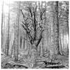 Dead wood, Portmoak Moss