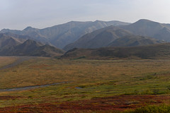 A Mountain Backdrop for a View Across the Denali Tundra (Denali National Park & Preserve)