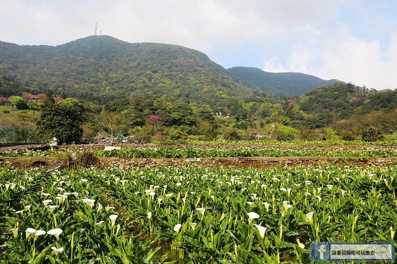 陽明山竹子湖033