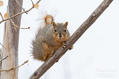 February 23, 2020 - A squirrel paying close attention.  (Tony's Takes)