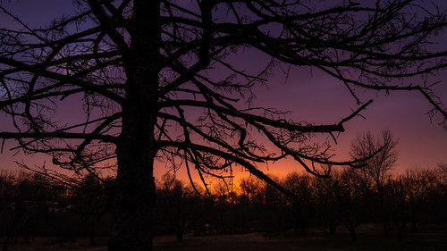 Sunrise Through the Branches
