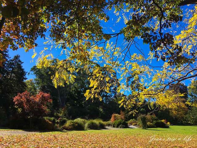 美麗的哈格利公園 Hagley Park