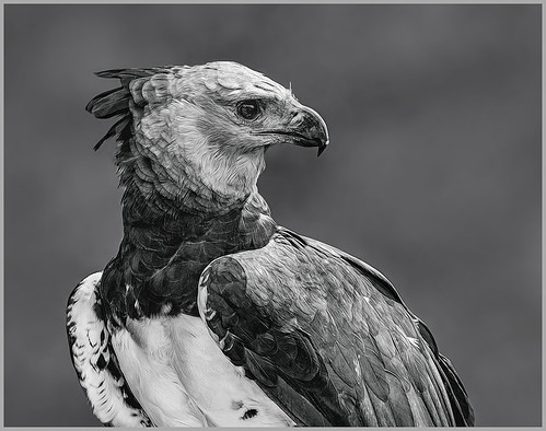 Tropical Eagle by Marcia Nye - Class A Print Honorable Mention - Jan 2020