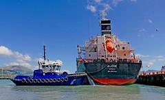 Anglų lietuvių žodynas. Žodis cargo deck reiškia krovinių denio lietuviškai.