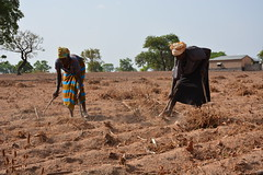 Farmers clearing shrubs on a communally owned land