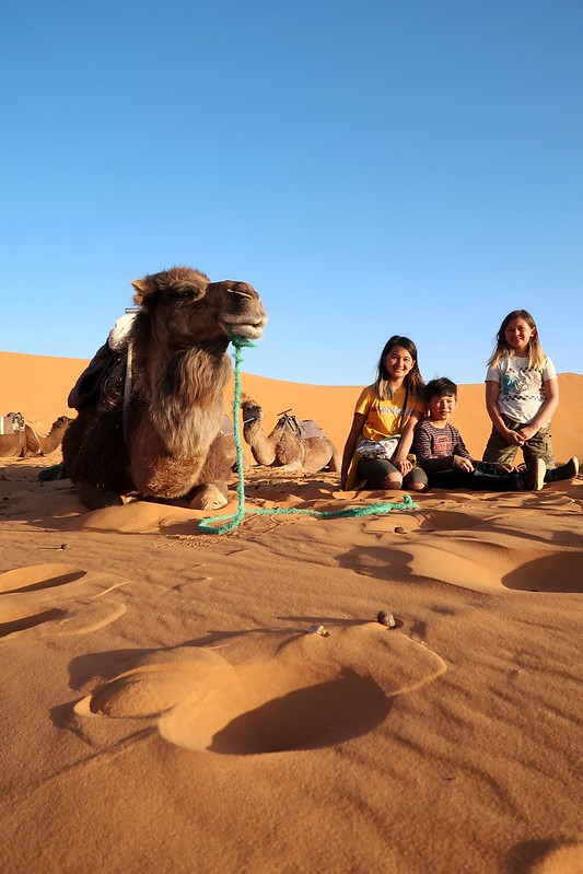 Camping with camels in the Sahara Desert, Morocco (Erg Chebbi) Drove here with our US plated self built Sprinter 4x4 van.