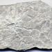 Mudcracked limestone (Tyrone Limestone, Middle Ordovician, 454 Ma; Frankfort, Kentucky) 2