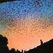 Bat Flight from Natural Entrance Carlsbad Caverns National Park, New Mexico