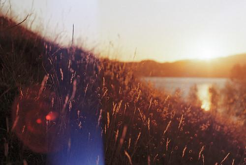 Sunset - Puriri Bay